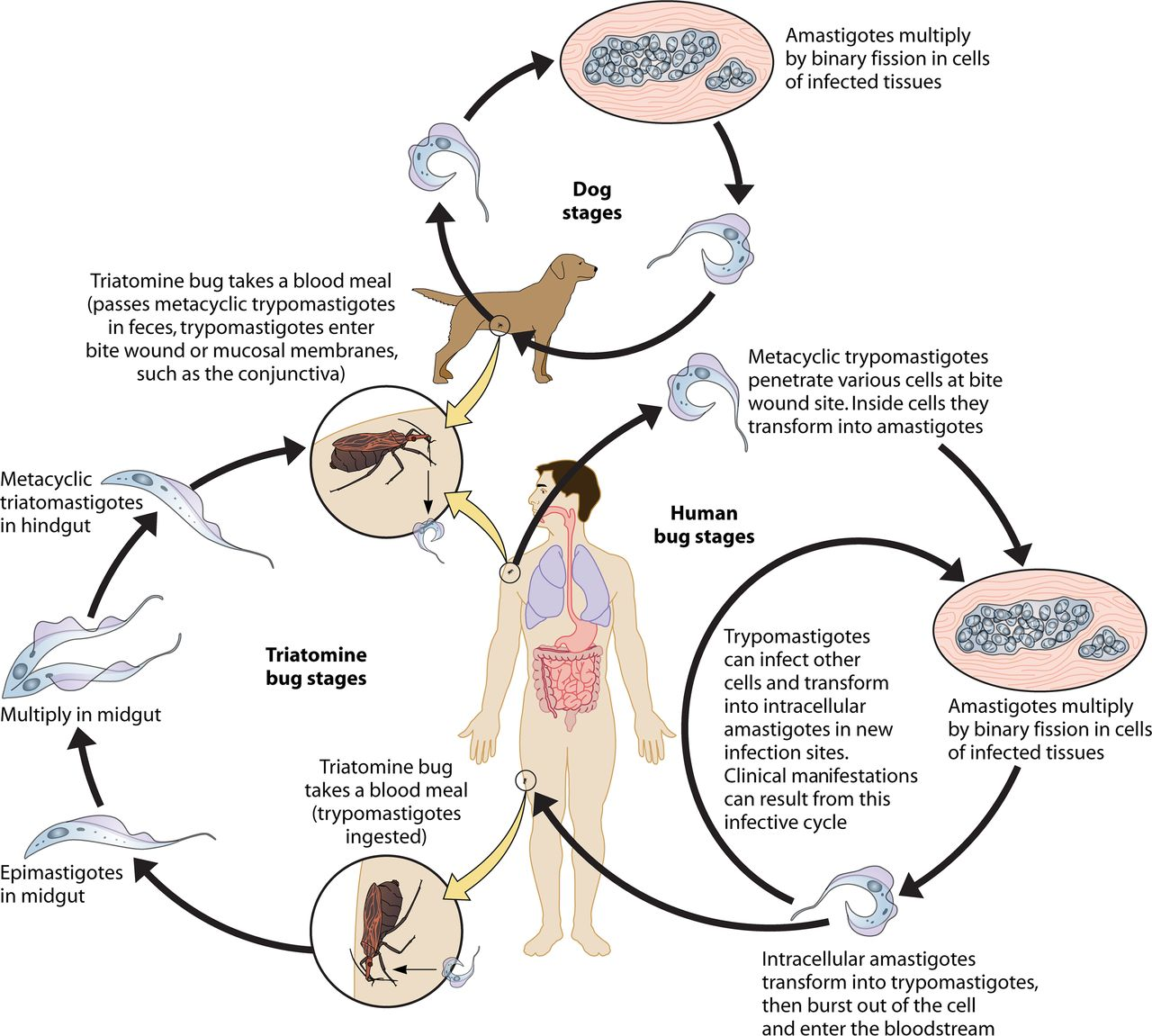 Zoonotic helminth infection that causes blindness - Gejala enterobiasis, Much more than documents.